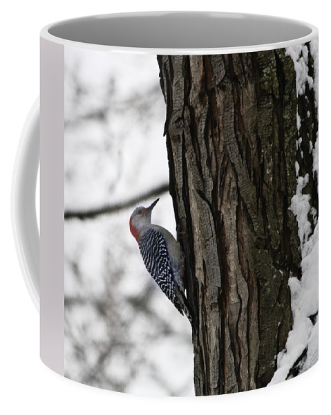 Woodpecker Coffee Mug featuring the photograph Red Bellied Woodpecker No 1 by Teresa Mucha