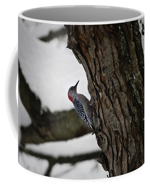 Woodpecker Coffee Mug featuring the photograph Red Bellied Woodpecker No 2 by Teresa Mucha