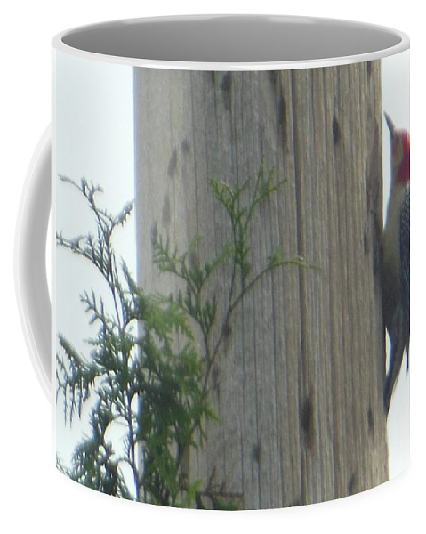 Red Bellied Coffee Mug featuring the photograph Red Bellied Woodpecker by Rockin Docks Deluxephotos