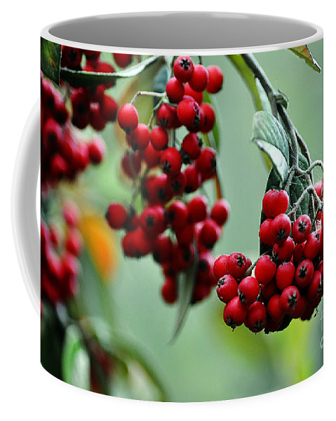 Clay Coffee Mug featuring the photograph Red Berries by Clayton Bruster
