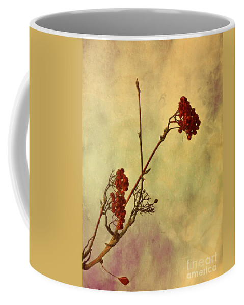 Berries Coffee Mug featuring the photograph Red Berries by Tara Turner