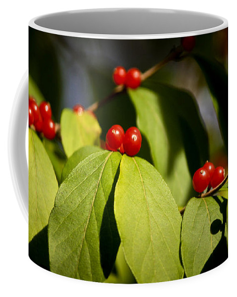 Red Coffee Mug featuring the photograph Red Berries by Teresa Mucha