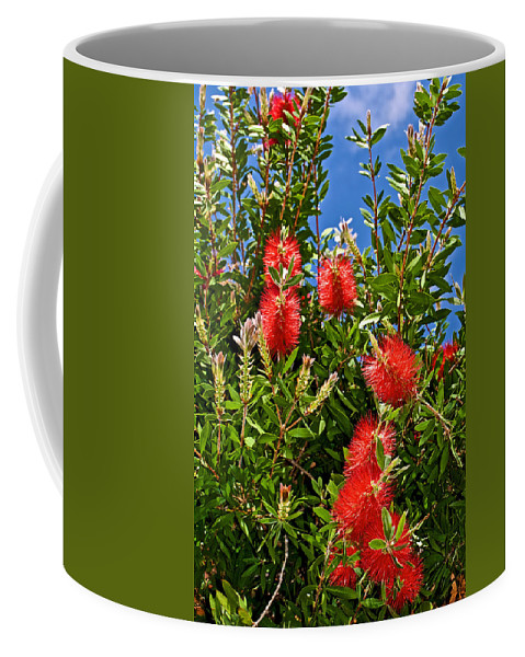 Red Bottlebrush At Pilgrim Place In Claremont Coffee Mug featuring the photograph Red Bottlebrush At Pilgrim Place In Claremont-california by Ruth Hager