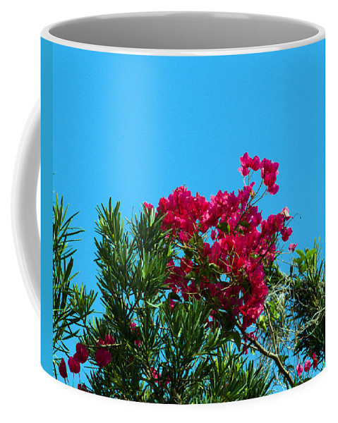 Red; Bougainvillea; Glabra; Juniperus; Vitginiana; Silicicola; Coastal; Cedar; Tree; Vine; Grow; Gro Coffee Mug featuring the photograph Red Bougainvillea Glabra Vine by Allan Hughes