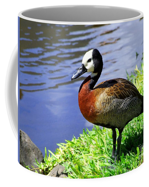 Red Coffee Mug featuring the photograph Red Breasted Wood Duck by Mary Deal