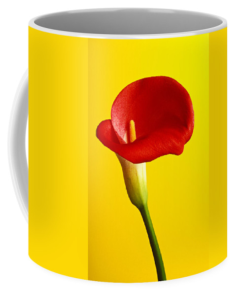 Red Yellow Flower Flowers Calla Lily Lilies Stem Yellow Graphic Design Bright Color Colors Colour Colours Colorful Distinctive Lilum Lilys Arum Bulb Close Up Detail Details Beauty Nature Beautiful Blossom Delicate Fragile Growing Vertical Plant Plants Concepts Decoration Bloom Blooming Botanical Floral Horticulture Floriculture Blossoming Flowering Petal Serenity Stamen Majestic Grow Unusual Coffee Mug featuring the photograph Red Calla Lilly by Garry Gay