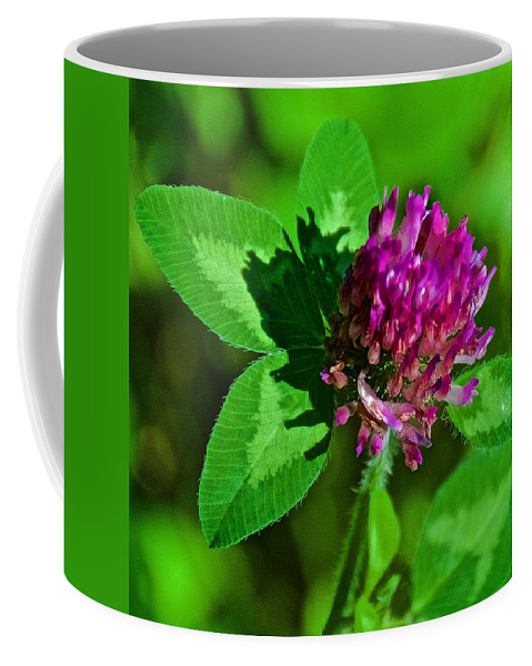 Red Clover Along Bike Trail Near Walker Coffee Mug featuring the photograph Red Clover Along Bike Trail Near Walker-minnesota by Ruth Hager