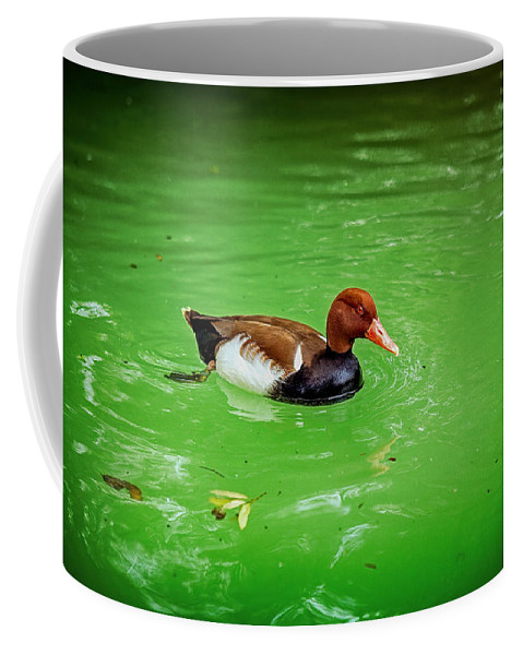 Duck Coffee Mug featuring the photograph Red-crested Pochard Duck by Sennie Pierson