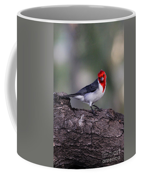 Bird Coffee Mug featuring the photograph Red Crested Posing by Jennifer Robin