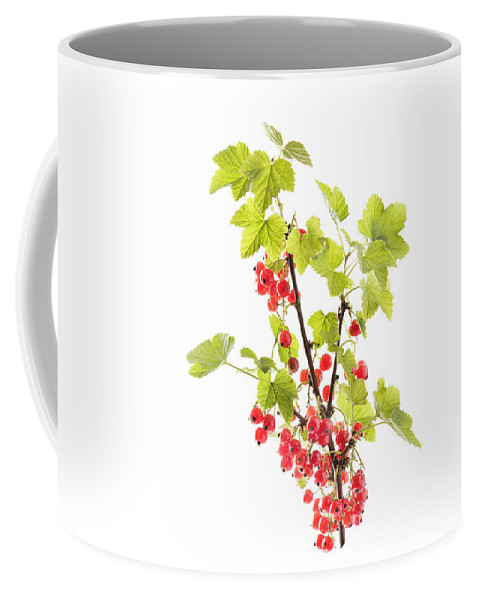 Places Coffee Mug featuring the photograph Red Currants by Julie Woodhouse