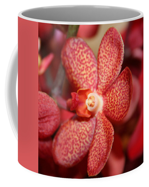 Flowers Macro Nature Digital Photograph Red Vibrant White Coffee Mug featuring the photograph Red Dots by Linda Sannuti