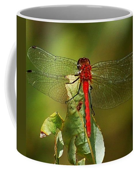 Digital Photograph Coffee Mug featuring the photograph Red Dragon Fly by David Lane