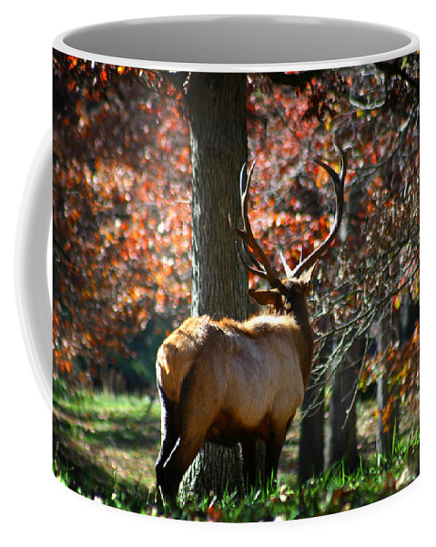 Elk Coffee Mug featuring the photograph Red Elk by Anthony Jones
