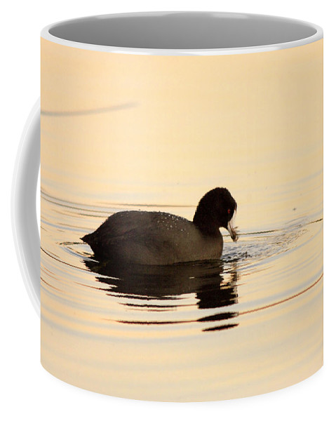 Bird Coffee Mug featuring the photograph Red Eye Flight by Donna Blackhall