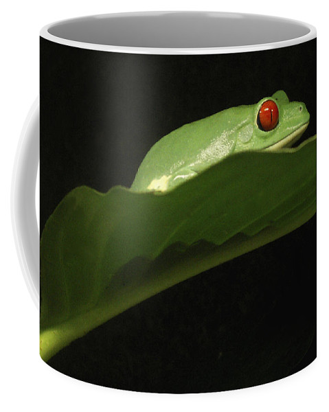 Frog Coffee Mug featuring the photograph Red Eye Frog by Nancy Griswold
