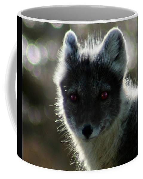 Arctic Fox Coffee Mug featuring the photograph Red Eyes by Anthony Jones