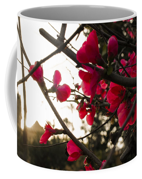 Sunset Coffee Mug featuring the photograph Red Flowers At Sunset by Andrea Mazzocchetti