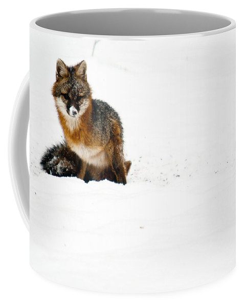 Fox Coffee Mug featuring the photograph Red Fox In The Snow by Douglas Barnett