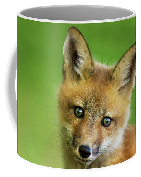 Peekaboo Coffee Mug featuring the photograph Red Fox Pup by Mircea Costina Photography