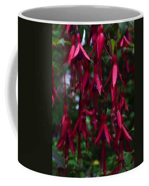 Fuchsia Coffee Mug featuring the photograph Red Fuchsia by Svetlana Sewell
