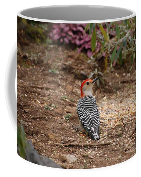 Birds Coffee Mug featuring the photograph Red Head by Lori Tambakis