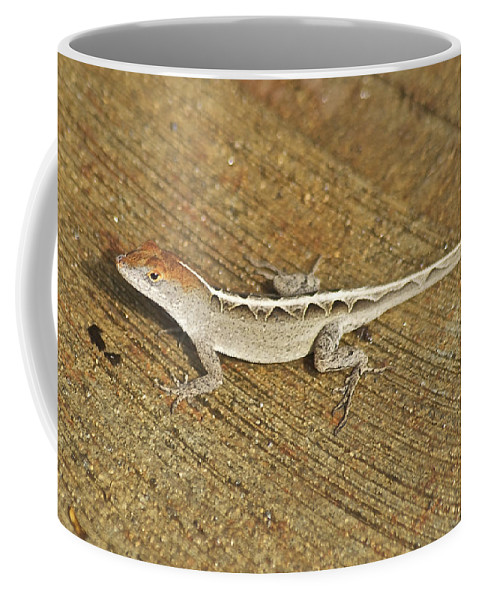 Wildlife Coffee Mug featuring the photograph Red Head by Michael Peychich