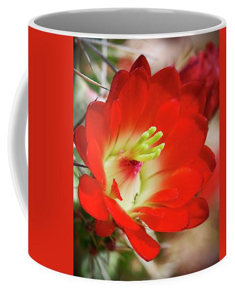Arizona Coffee Mug featuring the photograph Red Hedgehog by Saija Lehtonen