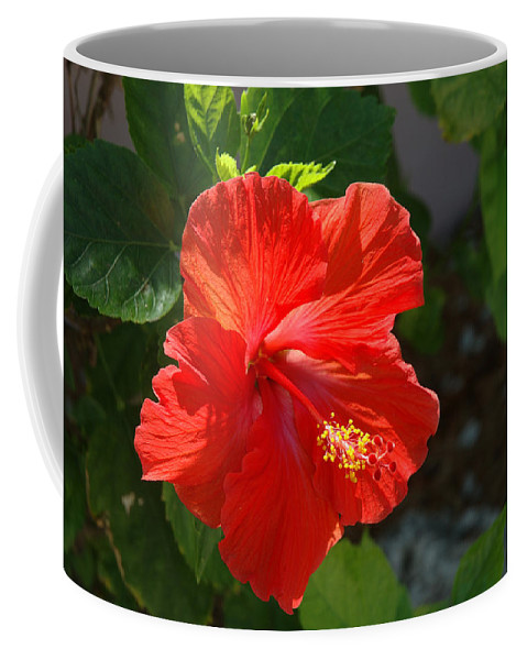 Hibiscus Coffee Mug featuring the photograph Red Hibiscus II by Susanne Van Hulst
