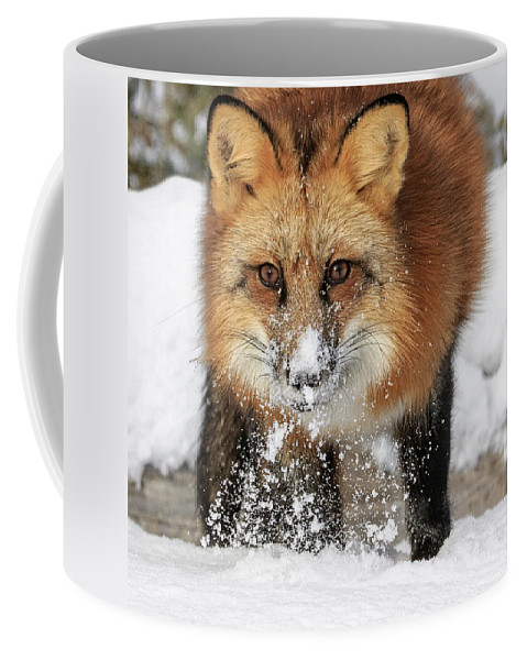 Red Hunter Coffee Mug featuring the photograph Red Hunter by Wes and Dotty Weber