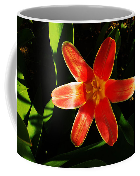 Tulip Coffee Mug featuring the photograph Red Laughing At Me by Jasna Dragun