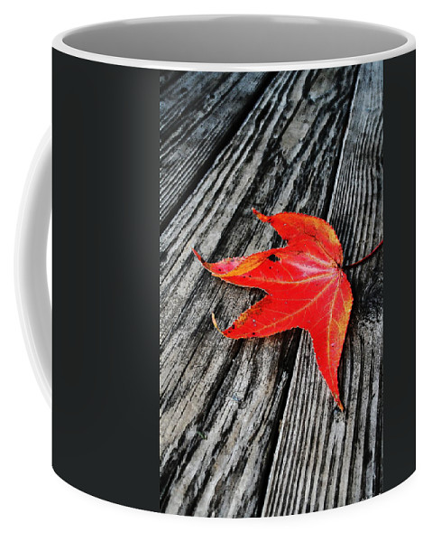 Nature Coffee Mug featuring the photograph Red Leaf by Linda Sannuti