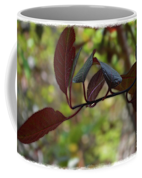Season Coffee Mug featuring the photograph Red Leaves With Frame by Debbie Portwood
