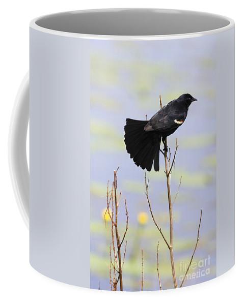 Bird Coffee Mug featuring the photograph Red On Blue by Deborah Benoit