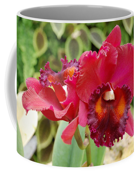 Macro Coffee Mug featuring the photograph Red Orchid by Rob Hans