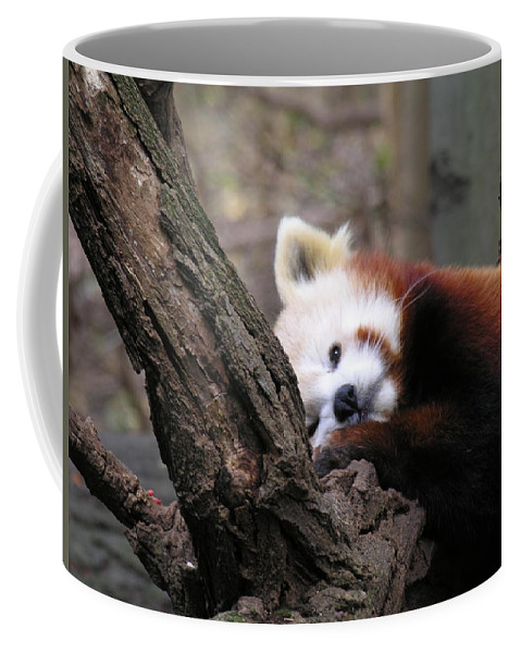 Red Coffee Mug featuring the photograph Red Panda by Diane Greco-Lesser