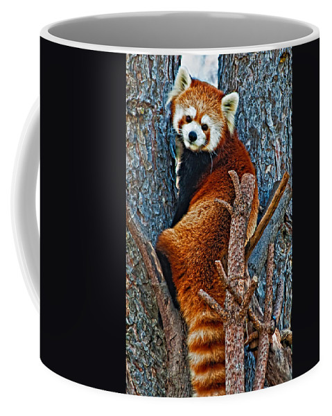 Panda Coffee Mug featuring the photograph Red Panda by Steve Harrington