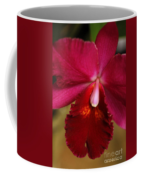 Flower Coffee Mug featuring the photograph Red Passion Orchid by Deborah Benoit