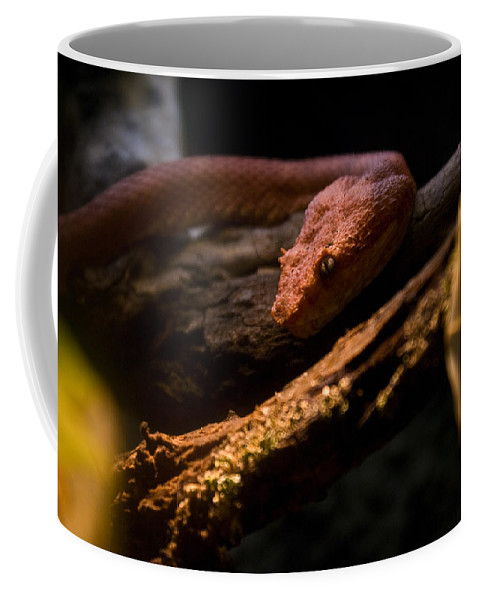 Red Coffee Mug featuring the photograph Red Poisonous Snake by Douglas Barnett