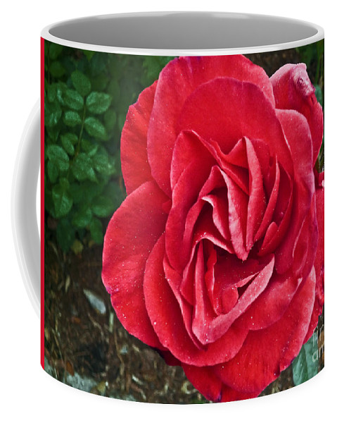 Red Rose Coffee Mug featuring the photograph Red Rose F135 by Howard Stapleton