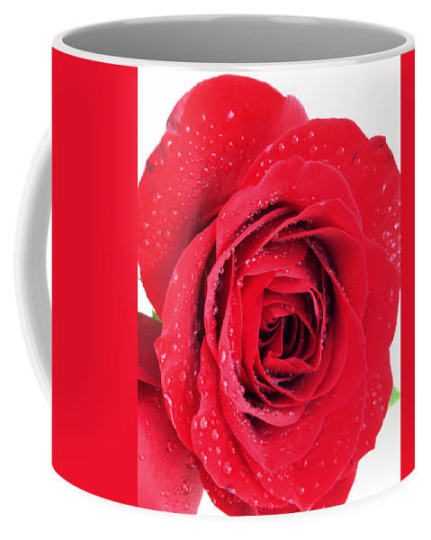 Red Rose Coffee Mug featuring the photograph Red Rose by Kathy M Krause