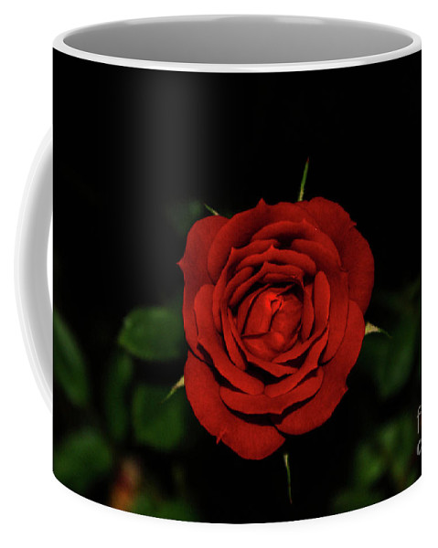 Red Coffee Mug featuring the photograph Red Rose by Kevin Gladwell