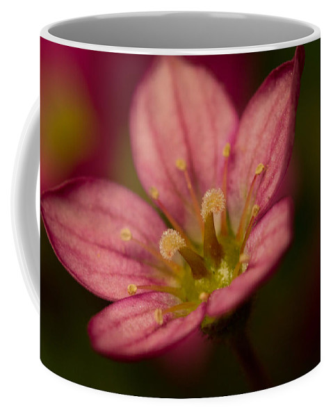 Greenwell Coffee Mug featuring the photograph Red Saxifraga by Sarah Greenwell