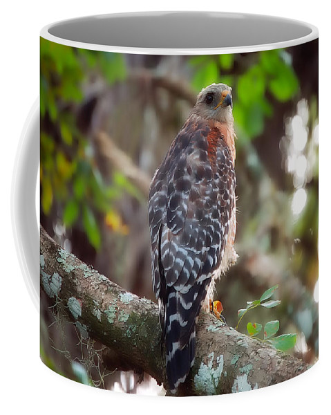 Bird Coffee Mug featuring the greeting card Red-shouldered Hawk by Rich Leighton