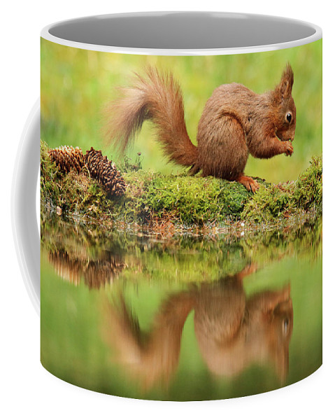 Wildlife Coffee Mug featuring the photograph Red Squirrel Reflection by Trevor Clifford