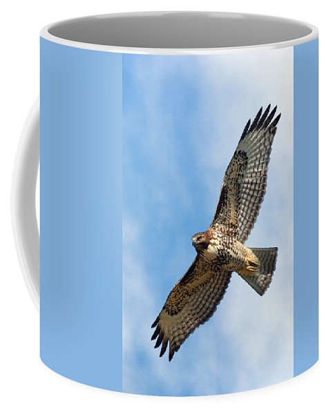 Hawk Coffee Mug featuring the photograph Red Tail Hawk by Randall Ingalls
