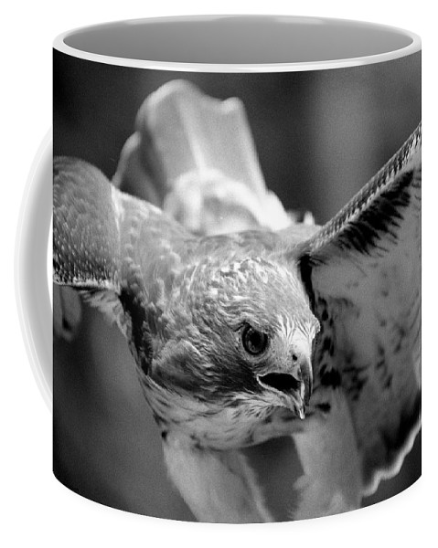 Red-tailed Hawk Coffee Mug featuring the photograph Red-tailed Hawk In Flight by John Harmon