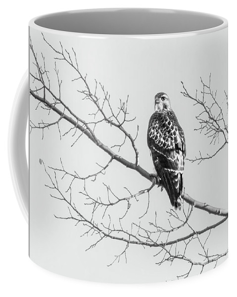 2017 Coffee Mug featuring the photograph Red-tailed Hawk On Perch by Cary Leppert