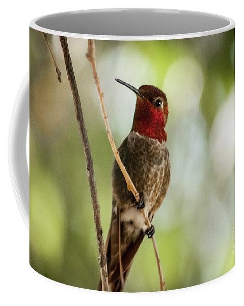 Arizona Coffee Mug featuring the photograph Red Throated Hummingbird by Chandra Nyleen