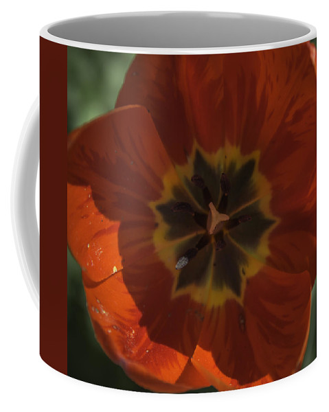 Flowers Coffee Mug featuring the photograph Red Tulip Center by Teresa Mucha