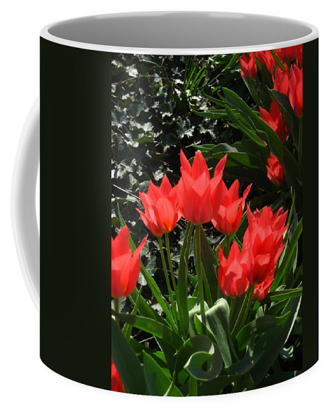 Flowers Coffee Mug featuring the photograph Red Tulips by Sherry Oliver